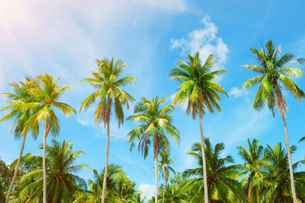 Organizational Transformation for a Caribbean Telecom Carrier